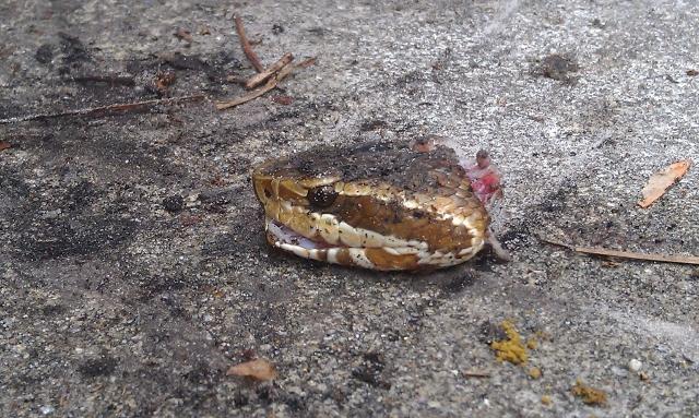 Dead Snake Head