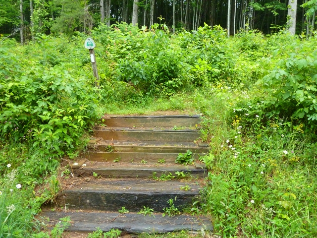 Steps at Devil Fork